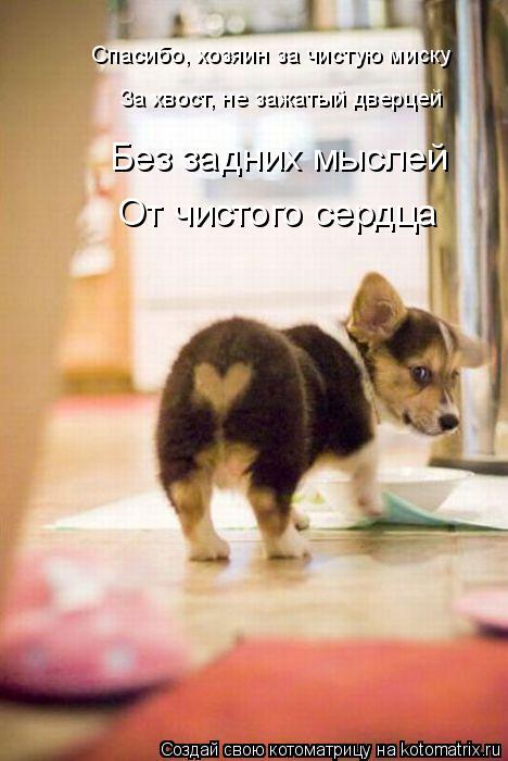 Котоматрица - Спасибо, хозяин за чистую миску За хвост, не зажатый дверцей Без задни