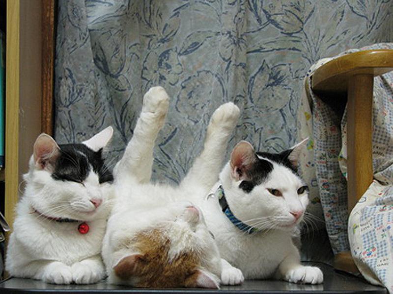Коты рекомендуют  (25 фото)