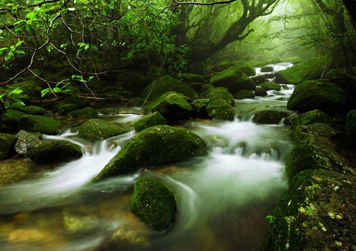 Сказочные леса острова Якусима (12 фото)
