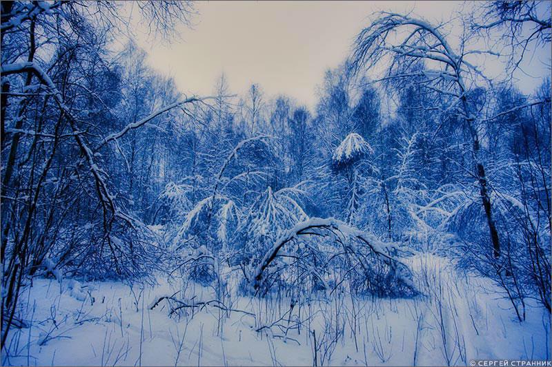 Фото Гжель Рассвет в зимнем лесу