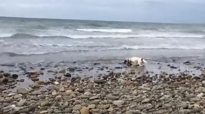 Дельфина выбросило на берег. То, что сделает собака, просто невероятно! Видео