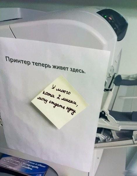 Когда в офисе завелись юмористы прикол, факты