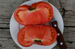 Можно ли «дозреть» помидоры в домашних условиях?