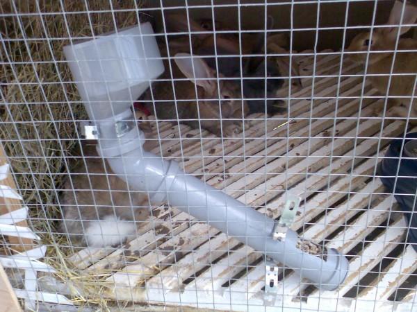 Бункерная кормушка для кроликов своими руками из трубы 75