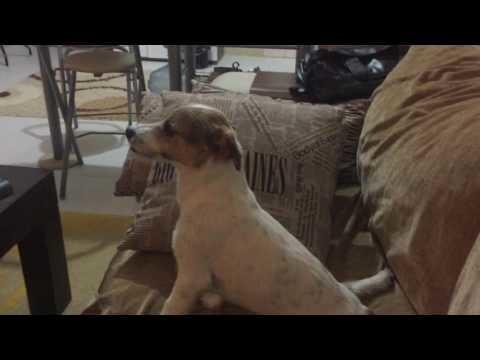 Собака смотрит фильм ужасов
