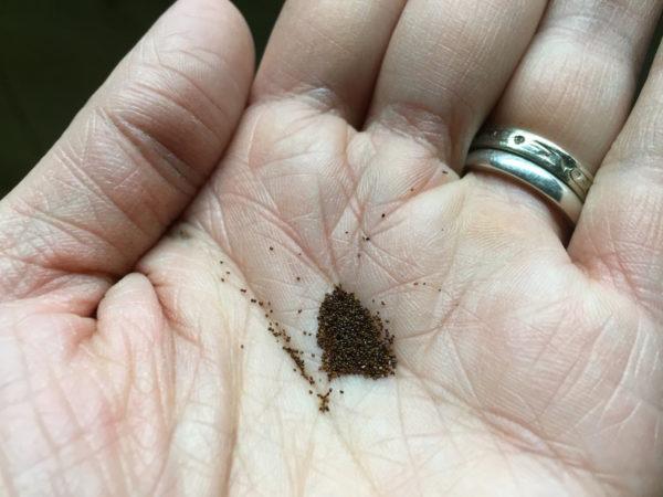 Сухие семена надежнее