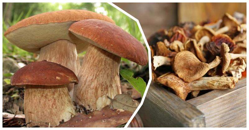 Как правильно сушить грибы, чтобы сохранить природный вкус и аромат: подборка проверенных советов