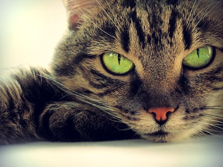 Нежный зверь как кошки захватили мир