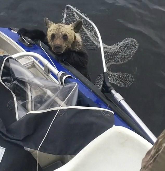 Винни Пух уже шел на дно… Рыбаки еле успели вытащить утопающего медвежонка!