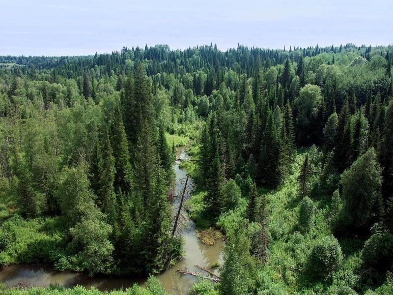 Природа Тайги