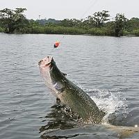 Чудо Амазонии