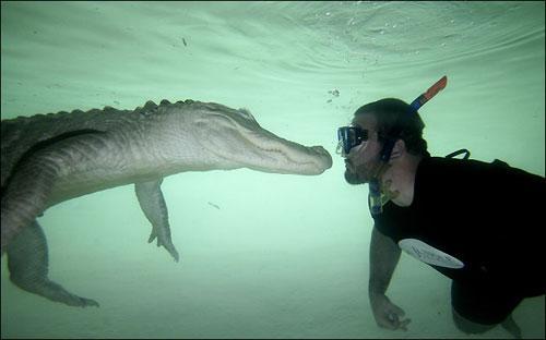 Водный экстрим с аллигатором