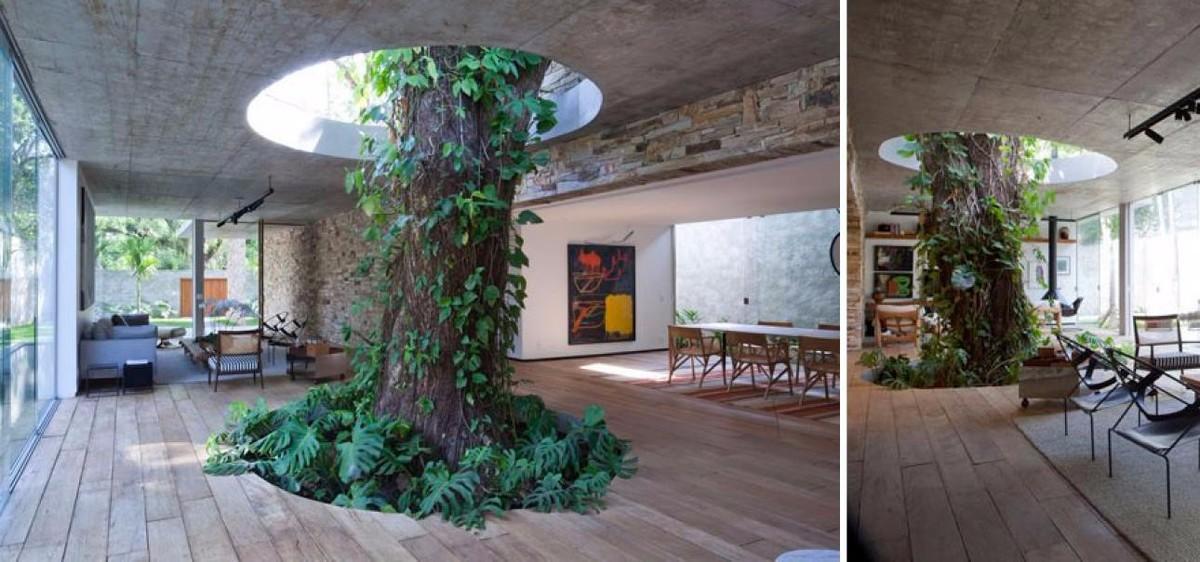 Дерево в доме как деталь интерьера