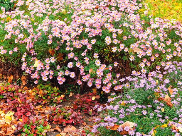 Красивый сад осенью. Осенние декоративные растения с яркими цветами