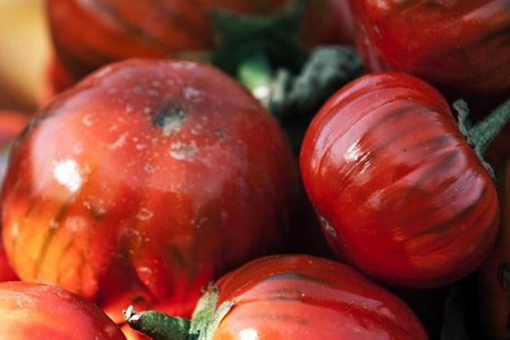 Красные баклажаны, черные помидоры и перцы в виде змей
