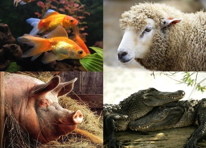 10 фактов: Заблуждения о животных