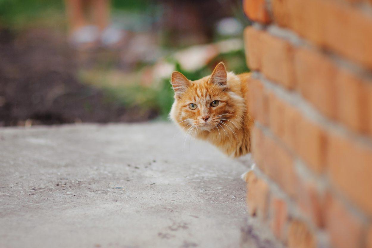 Как я случайно подставил соседского кота