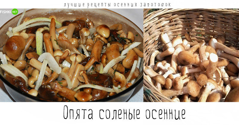 маринованные опята с луком рецепт с фото