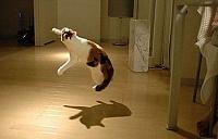 Кошки и Котята 14