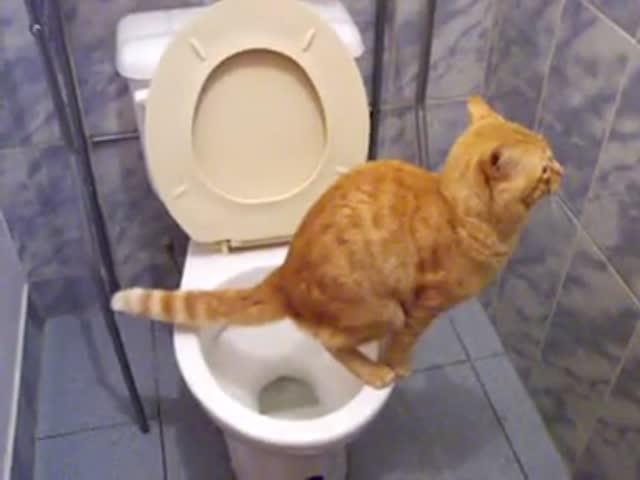 чтг нужно давать котёнку чтобы он какал