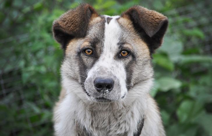 Этот пёс каждый вечер приходил на кладбище и я решил проследить за ним
