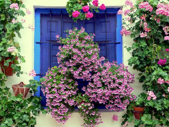 Сражение цветов