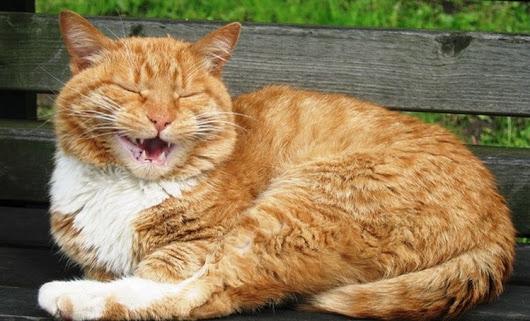 Кот против дверей, или Битва…