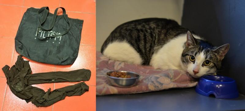 Сотрудники Питерского котокафе спасают подкинутого к ним связанного кота
