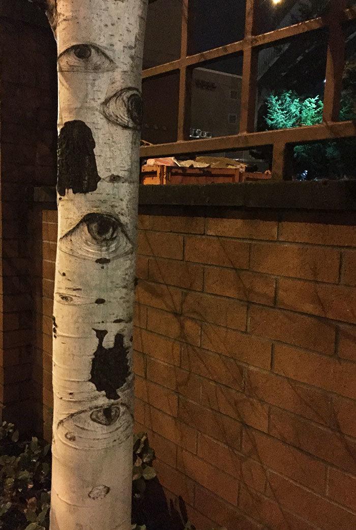 18. У него есть глаза дерево, деревья, обман зрения, парейдолия, похоже да не то же, похоже на, похоже на лицо