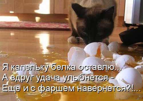 Кулинарные котоматрицы 36 (юмор)