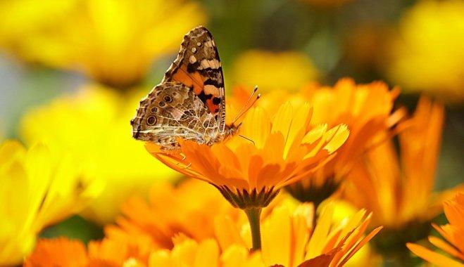 Рассада не нужна: 12 цветов, которые можно посадить прямо в землю и получить прекрасный сад