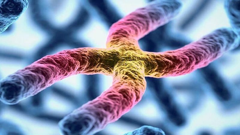 Красота внутри: микробиолог из Уфы показывает в инстаграме вирусы и бактерии, которые живут в нас