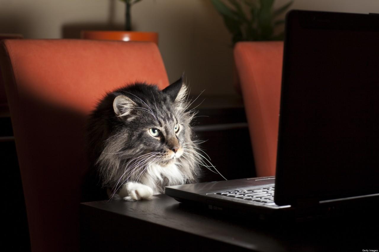 Требуется на работу кот. Оклад 20 тысяч рублей в месяц