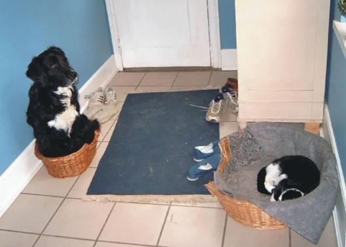 Как наглые коты отвоёвывают у собак жизненное пространство