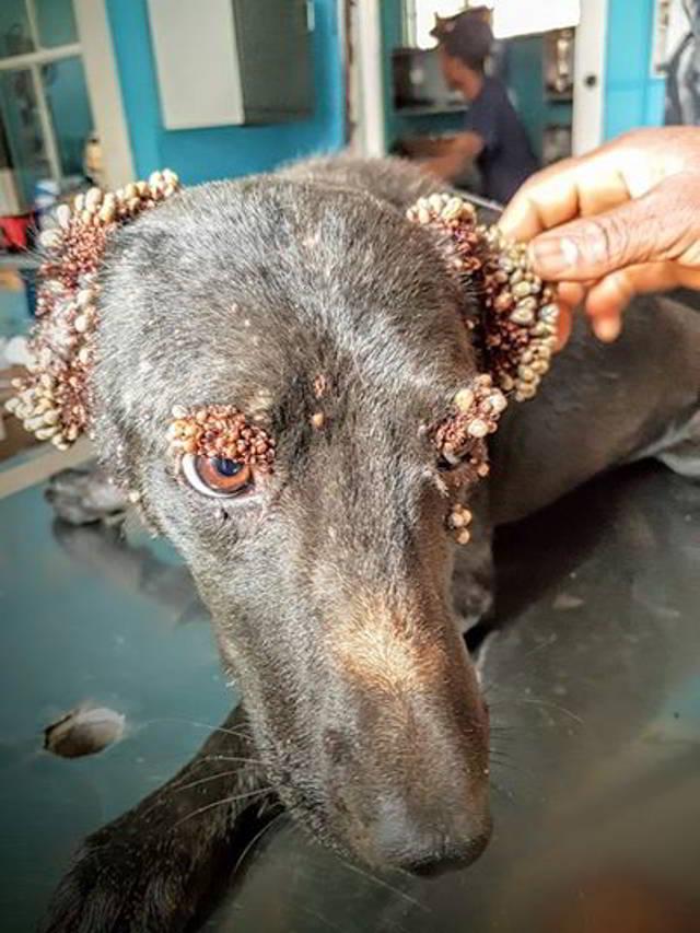 Ее глаза и уши были покрыты какими-то странными шарами. Но я присмотрелся – и понял, что это было на самом деле!