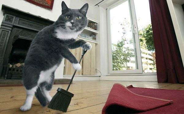 Проверенный и простой способ, как избавить свой дом от кошачьих меток