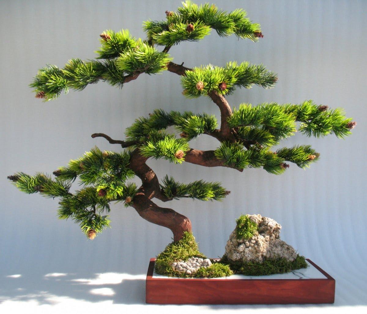 Изготовление бонсая - дерево своими руками