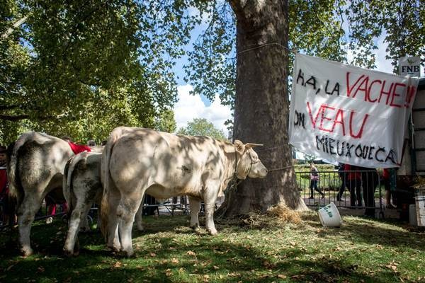 Политолог рассказал о самоубийстве 600 фермеров во Франции из-за продэмбарго РФ