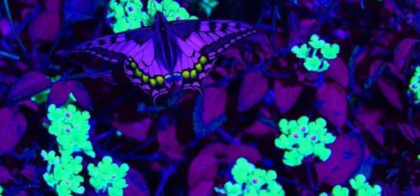 Официальным цветом наступающего 2018 года признан ультрафиолет