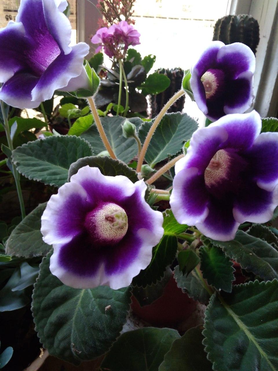 Красивые фото цветов,  для души...