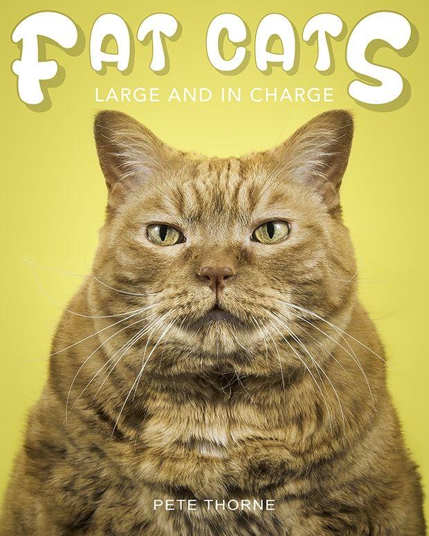 Толстота спасет мир: умилительно огромные коты в фотопроекте Пита Торна