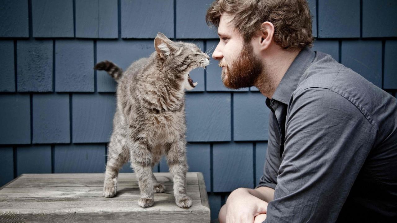 Расшифровка языка кошек