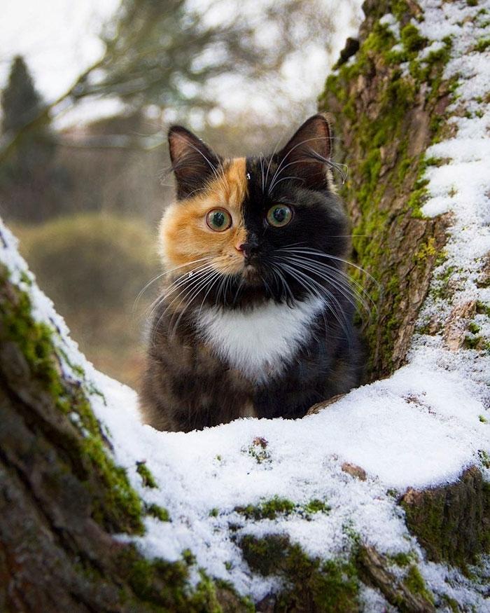 Двуликая кошка стала звездой Instagram