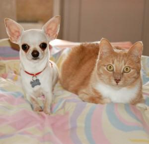 """Рубрика """"Вопрос-ответ"""". Кошка и собака."""