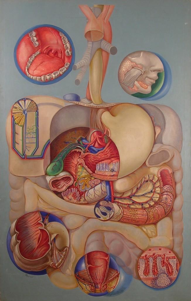 Причины появления болей в желудке после еды