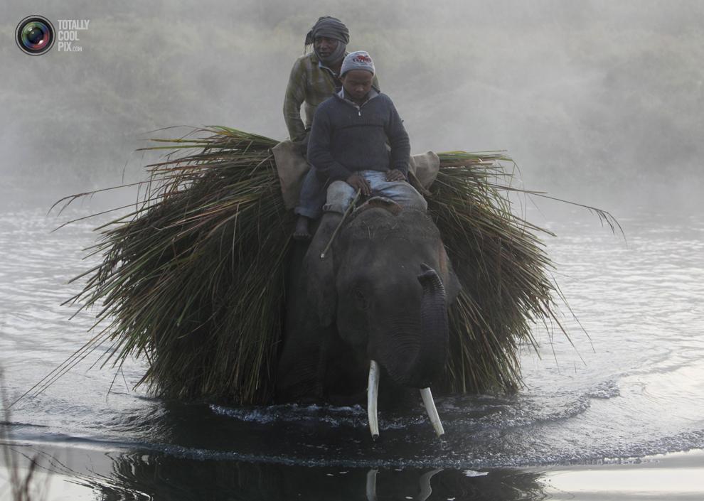 elephants 005 Слоны в национальном парке Читван