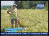 Жительнице Шелеховского района кот помогает собирать грибы