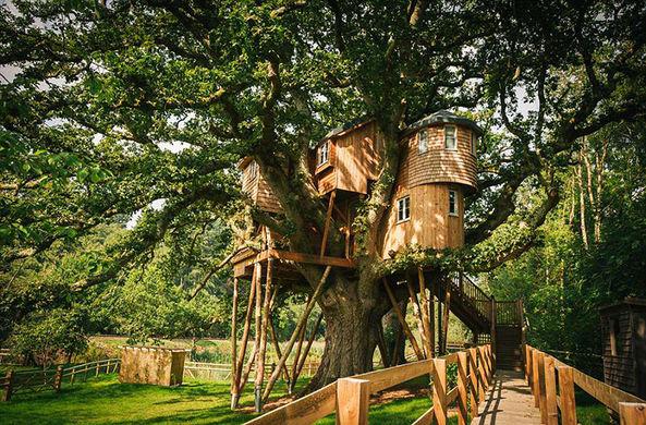 Сделаны снимки самого большого дома на дереве