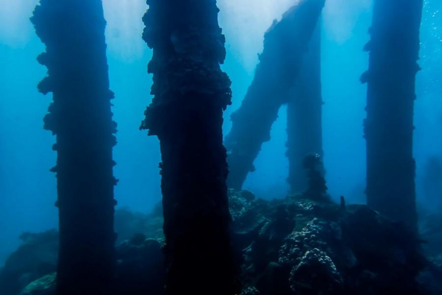 На дне Балтики найден мир, погибший 10 тысяч лет назад