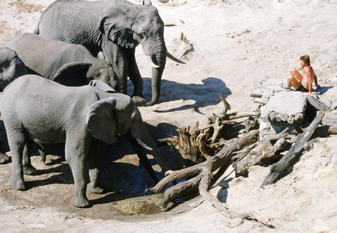Как отогнать собаку, осу, слона и прочую живую природу